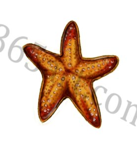 st 16 277x300 How to Draw a Starfish
