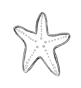 st 4 277x300 How to Draw a Starfish
