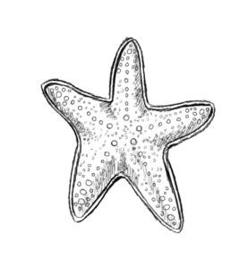 st 8 277x300 How to Draw a Starfish