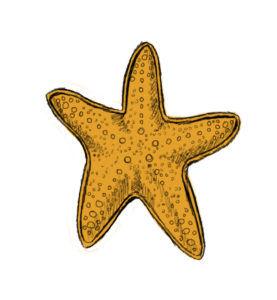 st 9 277x300 How to Draw a Starfish