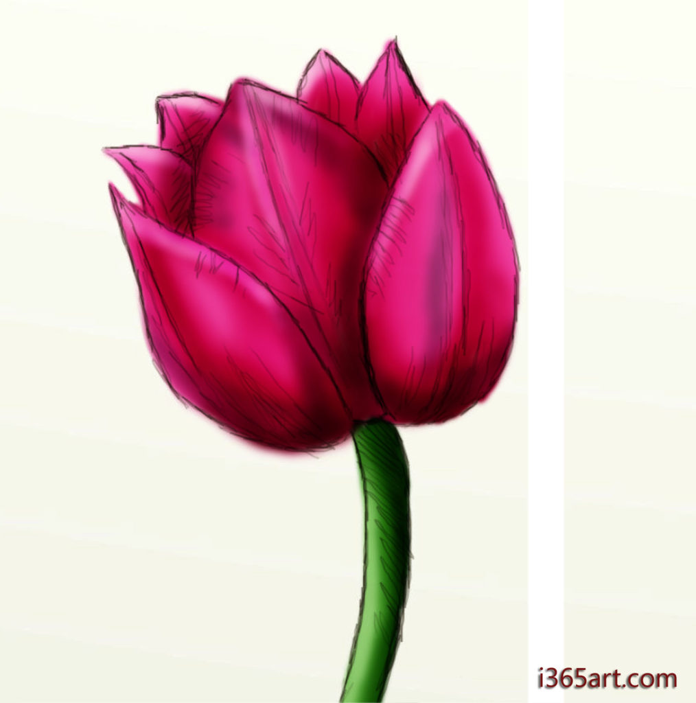 tulip 1014x1024 Day #216 More flower drawings