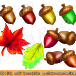 acorns-preview