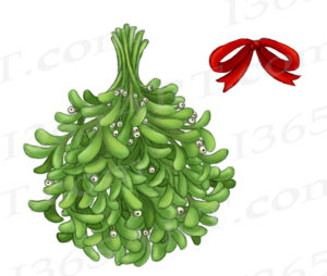 Mistletoe clipart watercolor