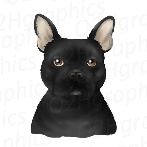 Black French Bulldog Clipart
